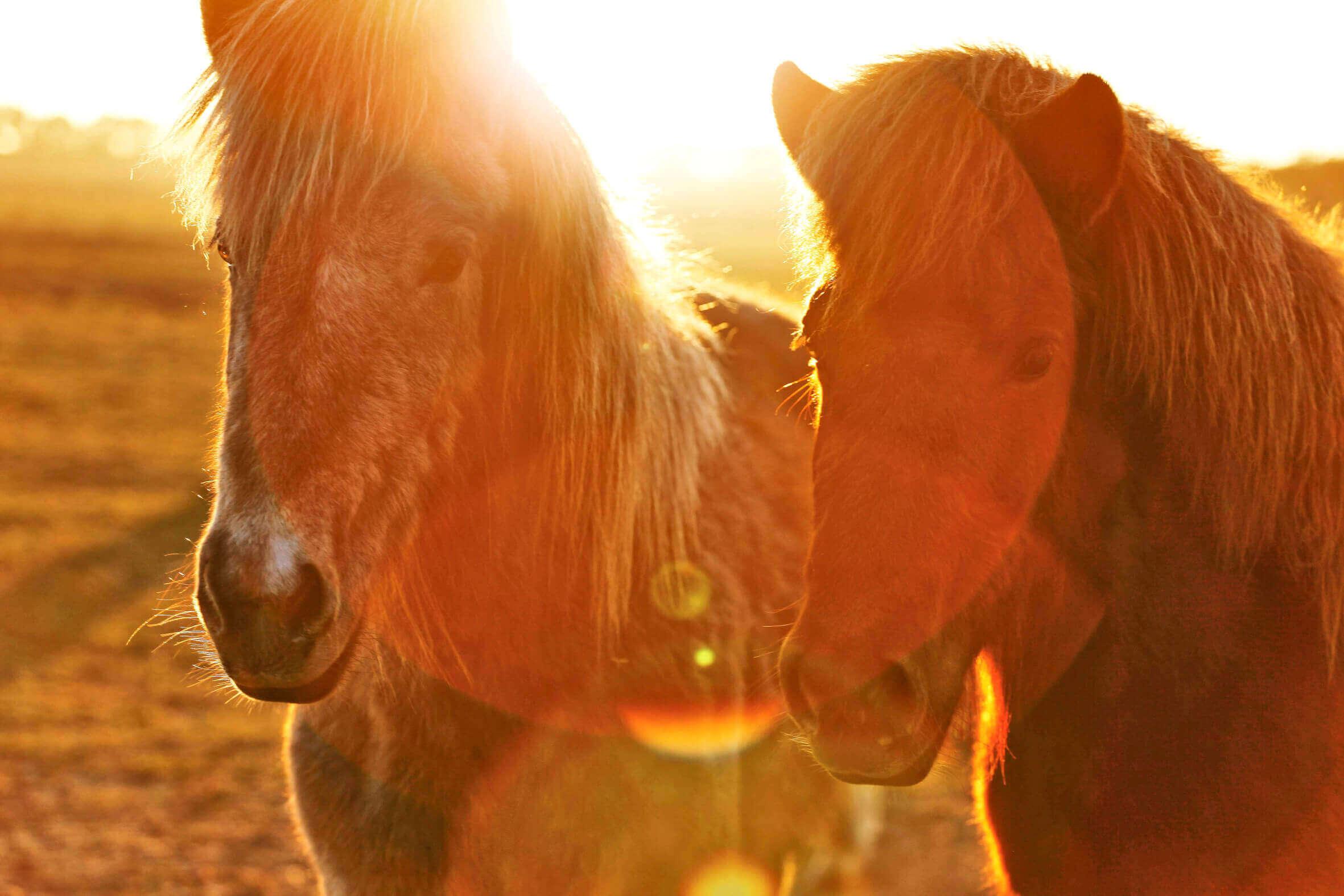Ponys_02
