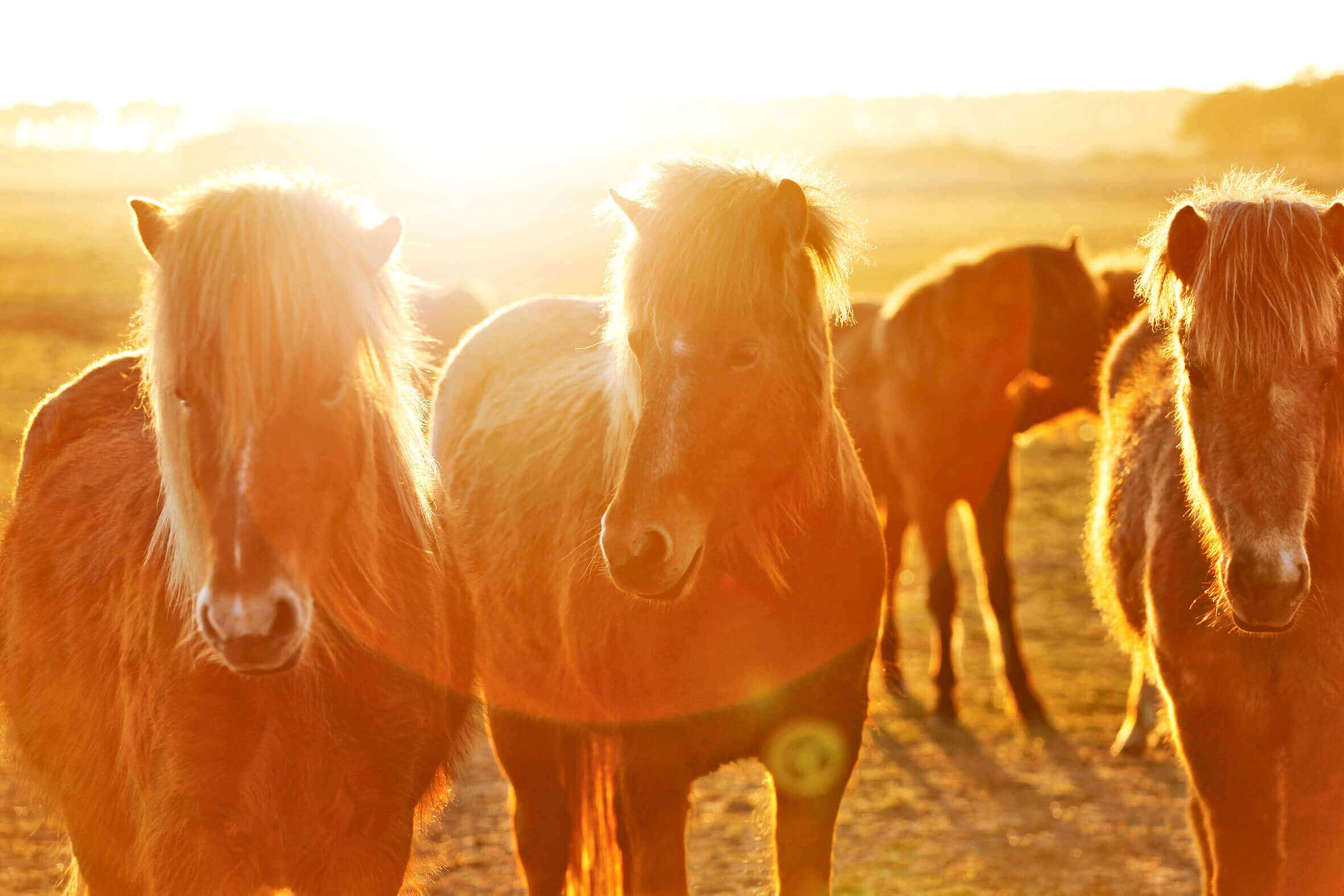 Ponys_03