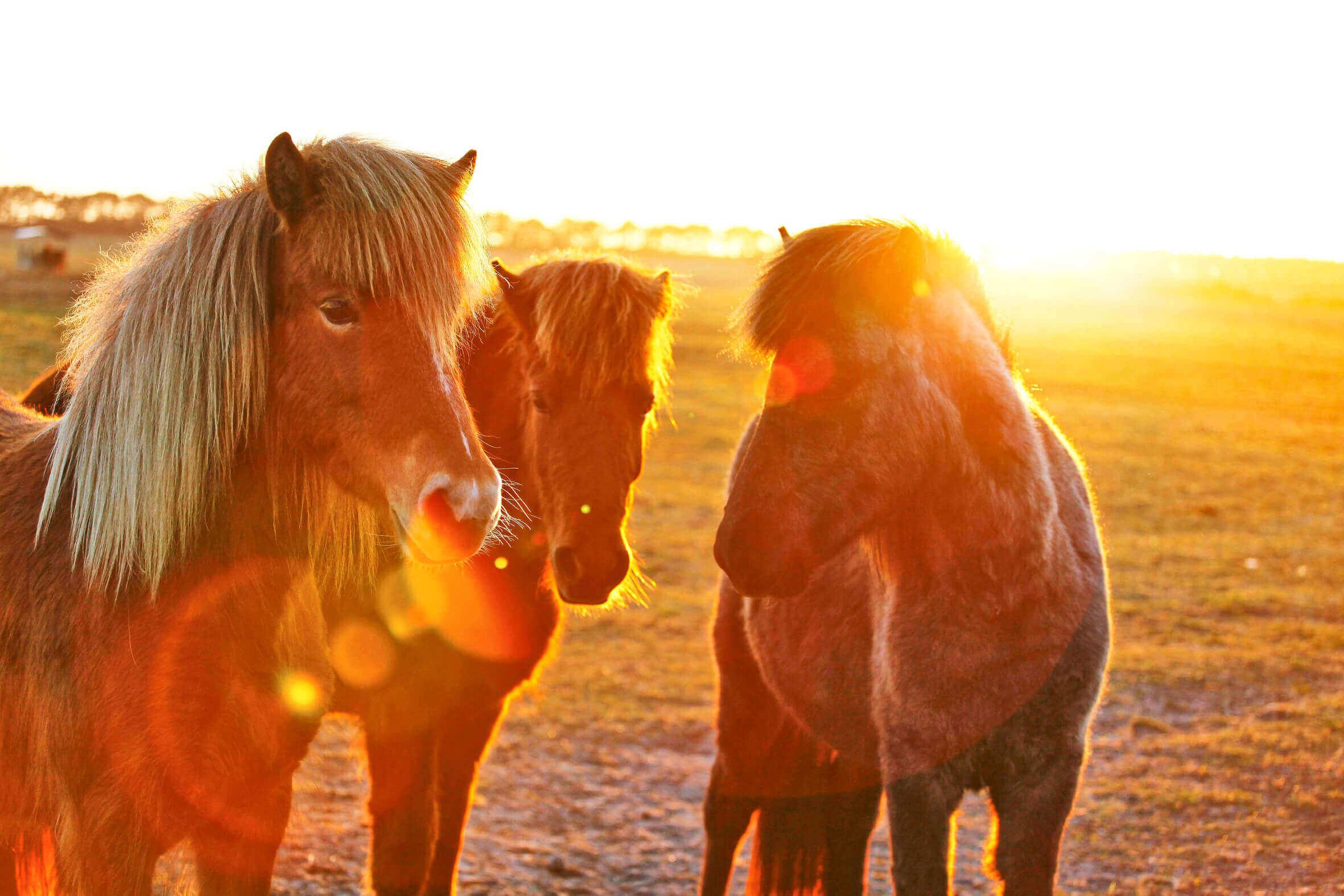 Ponys_04