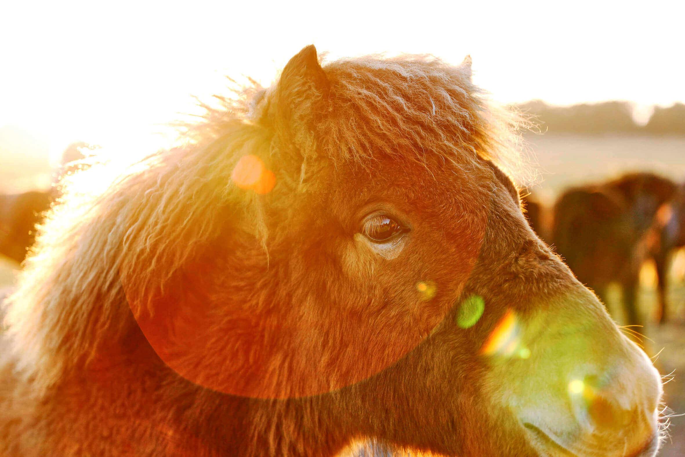 Ponys_06