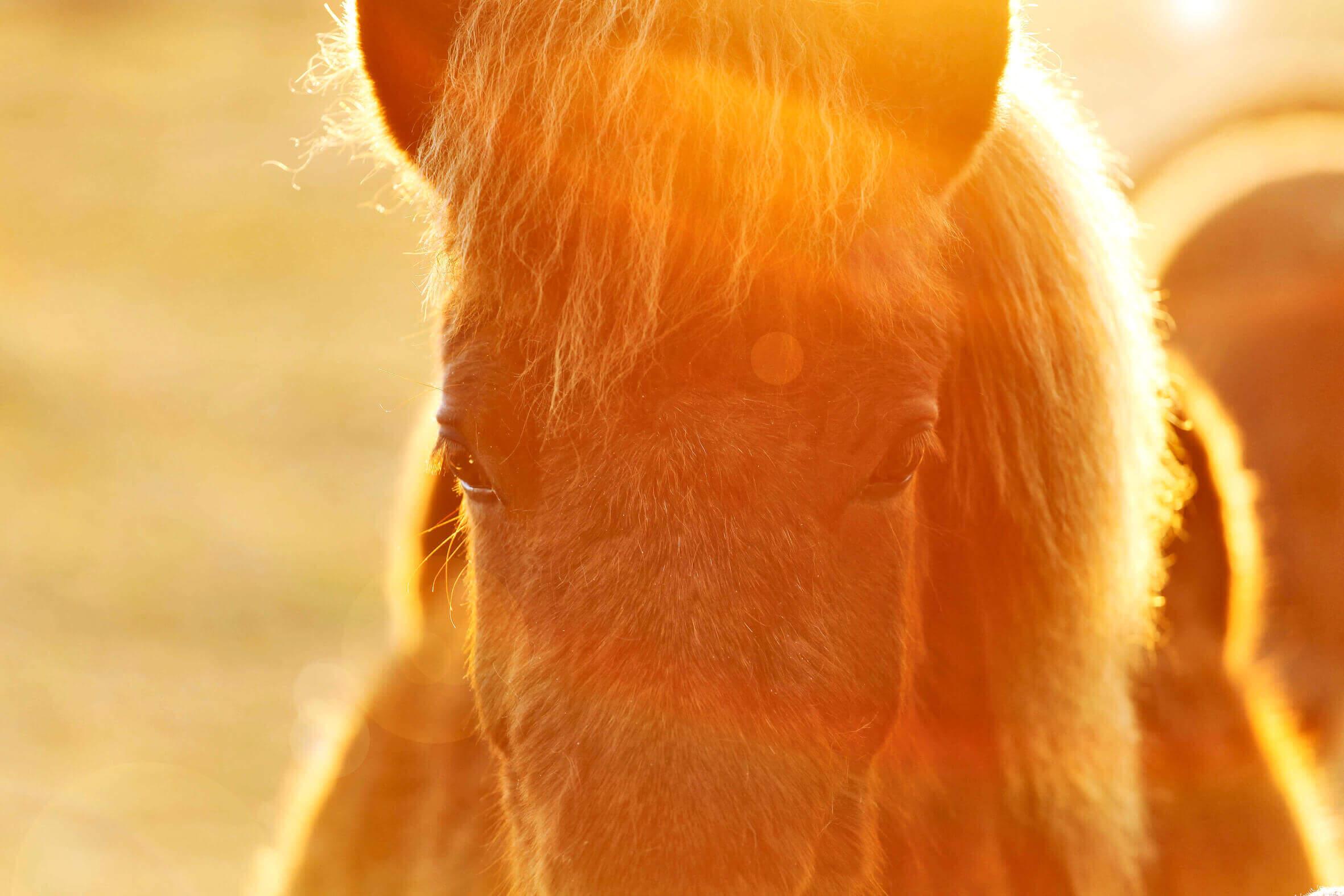 Ponys_08