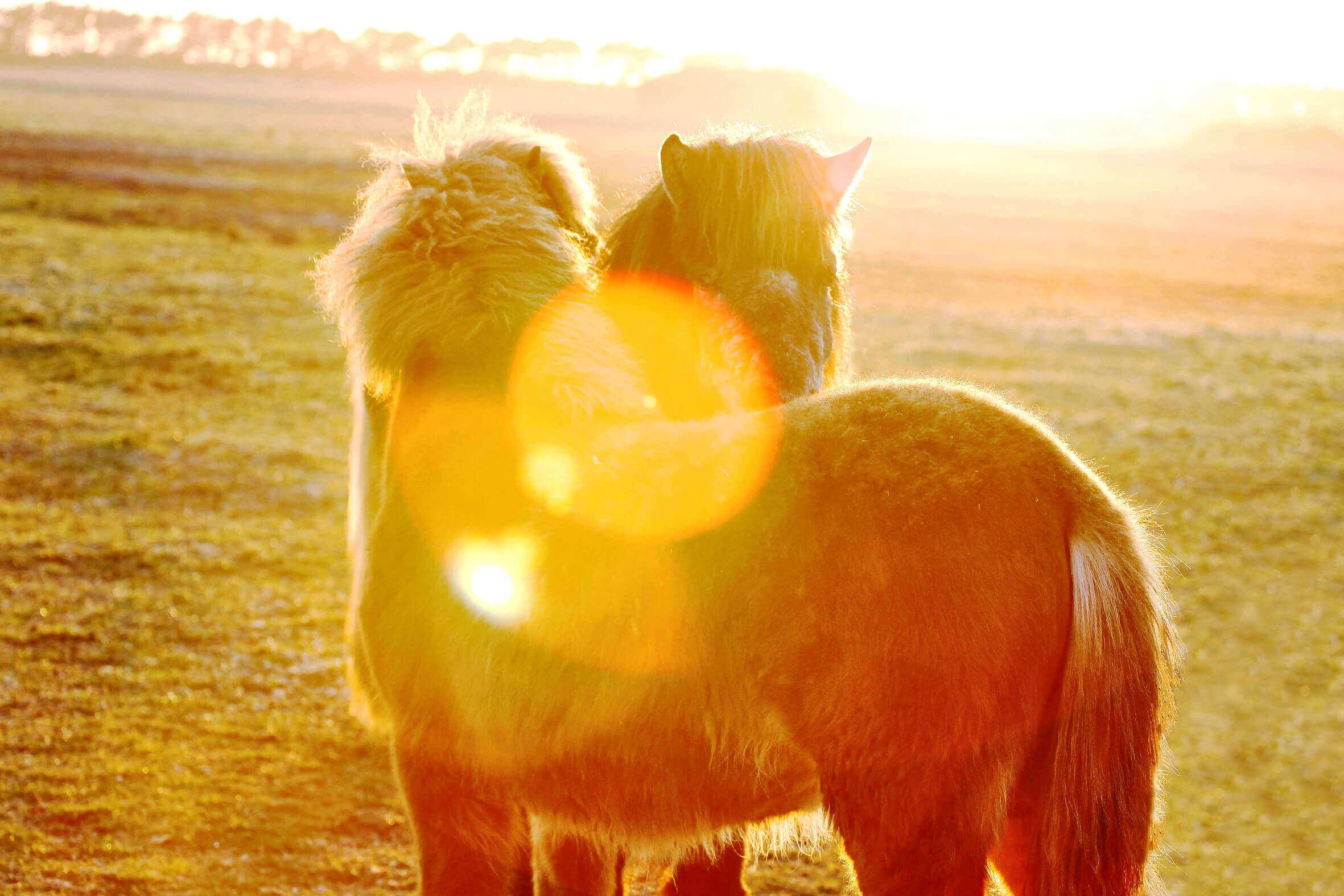 Ponys_09